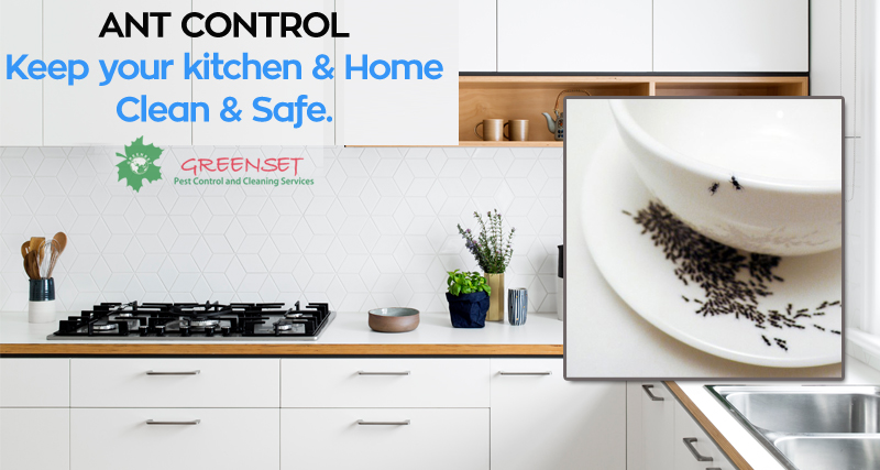 Superior Ant Control Services In Dubai