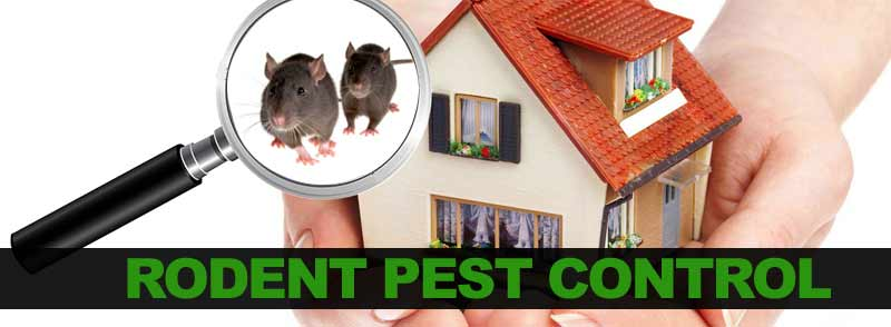 Image result for Rodent Pest Control